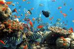 Sharjah Aquarium1