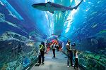 Sharjah Aquarium2